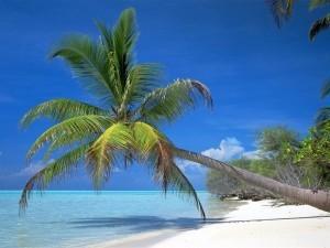 Palm-Tree-300x225